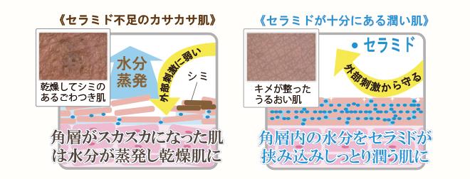保湿の主役は細胞間脂質。そして「セラミド」